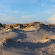Winterliche Vordünen am Meer: lauter kleine, mittlere und größere Sandhaufen, teilweise bewachsen mit gelbem Dünengras. Darüber ein hellblauer, leicht bewölkter Winterhimmel. (Foto: Birte Vogel)