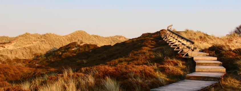 Herbstlich gefärbte Dünen in vielen unterschiedlichen Brauntönen vor blaumen Himmel. Rechts führt eine Holztreppe mit einseitigem Geländer in einem Bogen auf eine der Dünen. Foto: Birte Vogel