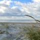 Im Vordergrund rechts ein paar Dünengräser auf einer flachen Vordüne, die sich durchs ganze Bild zieht. Dahinter das blau-weiß schimmernde Meer, darüber viele Wolken, zwischendrin knallblauer Himmel. Foto: Birte Vogel