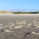 Im Vordergrund feuchter, dunkler Sand mit kleinen, vom Wind hochgewehten Häufchen, im Hintergrund Dünen und darüber ein blauer Himmel. Foto: Birte Vogel