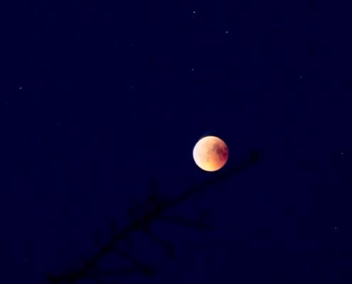 Dunkelblauer Himmel, einzelne Sterne leuchten, mitten im Bild taucht von unten ein dunkler Ast auf, der nach rechts oben in die Bildmitte strebt, auf der Spitze ein kugelrunder, leuchtend gelb-orangefarbener Vollmond, der sogenannte Blutmond.