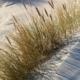 In weißen Dünen, mitten im Bild geht eine Reihe Dünengräser von unten links nach oben rechts, und wirft zahlreiche Schatten nach rechts (Foto: Birte Vogel)