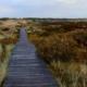 Ein Bohlenweg durch die Dünen von Amrum. Er führt etwas links von der Mitte vom Standpunkt aus, leicht uneben, geradeaus, an einer Sitzbank vorbei, und verliert sich dann in den Dünen. Rechts und links Sträucher und Gräser in hellem Grün und Beige, dazu starke Herbstfarben in rötlichem Braun und dunklem Senfgelb. Am Horizont ein schmaler Streifen dunkelgrüner Kiefernwald, darüber ein bewölkter Himmel. Foto: Birte Vogel