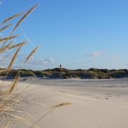 Am Strand mit Blick auf die Dünen. Links vorne im Bild Dünengräser, hinten ein grüner Dünenstreifen, mittig der Leuchtturm von Amrum. Foto: Birte Vogel