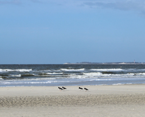 Vorne heller Sandstrand, auf dem fünf Austernfischer sitzen. Dahinter das dunkelblau-grüne Meer mit leichtem Wellengang. Darüber ein blauer Himmel mit wenigen Wolken. Rechts am Horizont liegt die Insel Sylt, erkennbar am Hörnumer Leuchtturm. Foto: Birte Vogel
