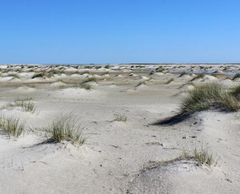 Am Strand: Weißer, feiner Sand, zu unzähligen kleinen Häufchen aufgehäuft, aus denen dünnes, grünes Dünengras wächst. Diese Häufchen liegen ganz durcheinander, so weit das Auge blicken kann. Darüber ein leuchtend blauer Himmel. (Foto: Birte Vogel)
