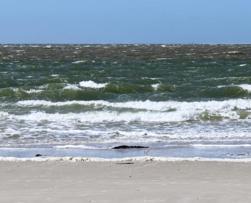 Blick vom Strand aufs Meer, vorne ein Streifen heller Sand, dann der Spülsaum, mittendrin ein kleiner Vogel, ein Alpenstrandläufer, dahinter in verschieden intensiven Dunkelgrün- und Braunfarben das unruhige Meer (Foto: Birte Vogel)