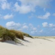 Links vorne eine mit Gras bewachsene Sanddüne. Das Gras hat viele sandfarbene Samenstände. Rechts davon der breite Kniepsand der Insel Amrum mit zahlreichen kleinen Stellen, an denen sich weiteres Gras angesiedelt hat. Ganz rechts am Horizont, kaum noch erkennbar, das Meer und dahinter der Leuchtturm von Hörnum auf Sylt. Darüber ein blauer Himmel mit Schafwölkchen. (Foto: Birte Vogel)
